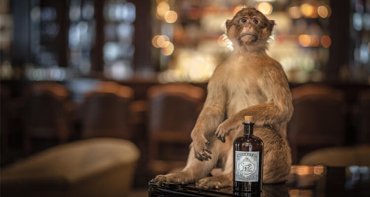 retro marketing monkey gin alkohol adstone wordpress cms design vintage