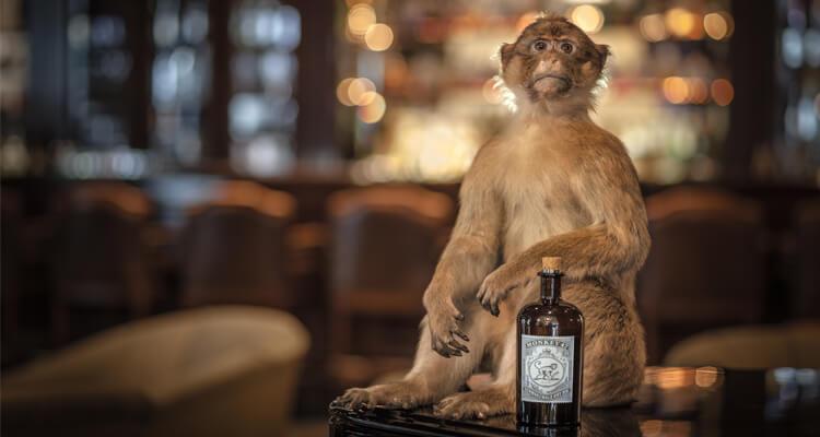 retro marketing monkey gin alkohol adstone wordpress cms design vintage